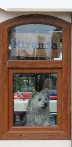Phoebe keeping watch on 36B Miranda